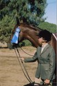 Lori and Morrision: So many blue ribbons, such a small bridle.