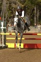 Hugh and Freelander (Tar) navigate the jumper ring at Pebble Beach