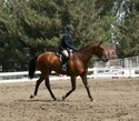 Brenda and Tex cut a fine figure under saddle at the WCC show