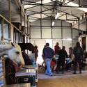 Hugh gives  dinnertime lecture to disinterested humans and equines.