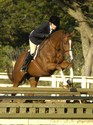 Debby and Berkeley wrap up the '07 show season with a win in the Ariat Adult Medal class at Pebble Beach.
