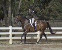 Jamie Lee and Richard in fine form in their Hunter Under Saddle class