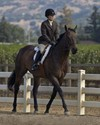 Equitation on the flat, damn that sitting trot!