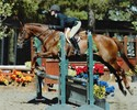 Kate and Morrison won multiple blue ribbons in equitation and medals and the WCC Show!