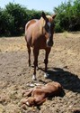 Foal Goal for Day one: master the art of napping.