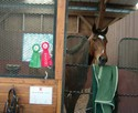 Maybe shows off the ribbons from his very first show with Sheila.