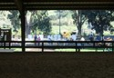 A beautiful day for a horse show - looking through the indoor ring to the schooling arena outside.