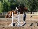 White pole oxers are easy after all that other crazy stuff