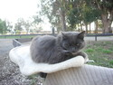 Graycie, our barn cat. We'll miss her.