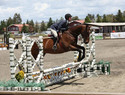 Highlight for Album: Sonoma Horse Park May Show