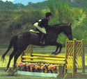 Hope and Morrison showing in the Hunter ring