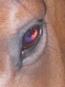Guess whose colorful eye this is?